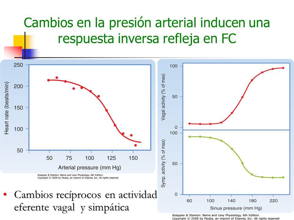 Cambios en la presión arterial inducen una respuesta inversa refleja en FC Cambios recíprocos en actividad eferente vagal y simpáticaCambios recíproco