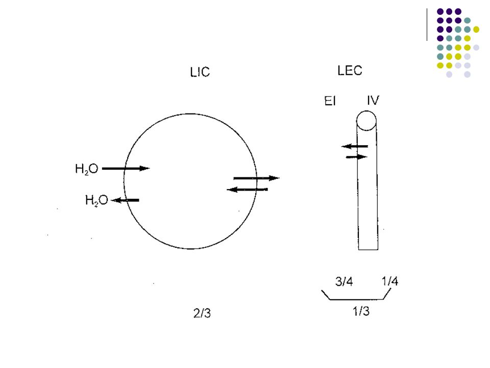 El número de partículas intracelulares es relativamente constante y los cambios de osmolalidad del LIC se deben a cambios en la cantidad de agua regulados indirectamente por el Na + del LEC.