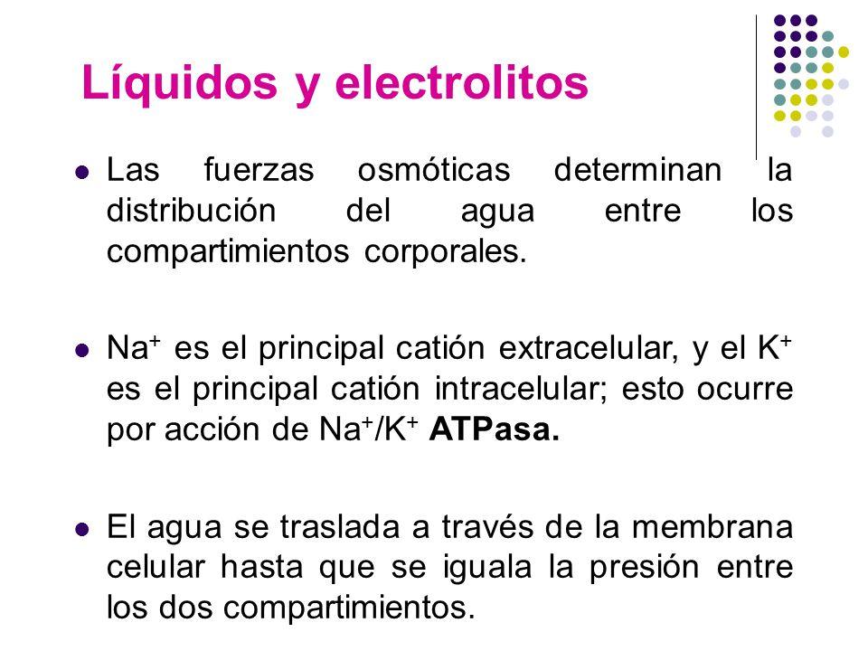 Líquidos y electrolitos Las fuerzas osmóticas determinan la distribución del agua entre los compartimientos corporales. Na + es el principal catión ex