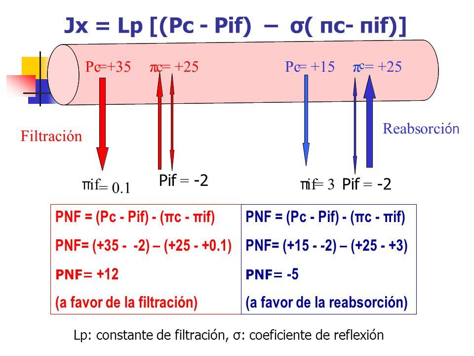 Filtración Reabsorci ón PNF = (Pc - Pif) - (πc - πif) PNF= (+35 - -2) – (+25 - +0.1) PNF= +12 (a favor de la filtración) PNF = (Pc - Pif) - (πc - πif)
