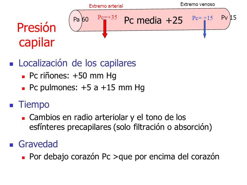 Presión capilar Localización de los capilares Pc riñones: +50 mm Hg Pc pulmones: +5 a +15 mm Hg Tiempo Cambios en radio arteriolar y el tono de los es
