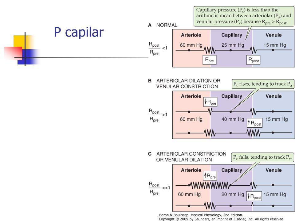 P capilar