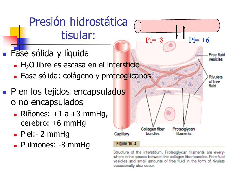 Fase sólida y líquida H 2 O libre es escasa en el intersticio Fase sólida: colágeno y proteoglicanos P en los tejidos encapsulados o no encapsulados R