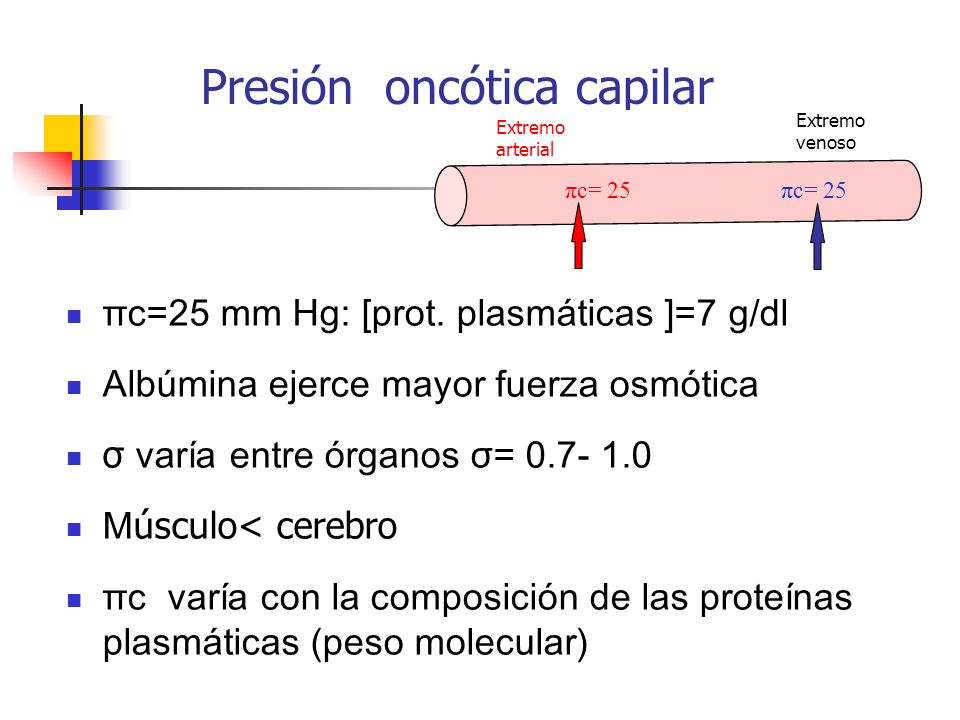 Presión oncótica capilar πc=25 mm Hg: [prot. plasmáticas ]=7 g/dl Albúmina ejerce mayor fuerza osmótica σ varía entre órganos σ= 0.7- 1.0 M úsculo< ce