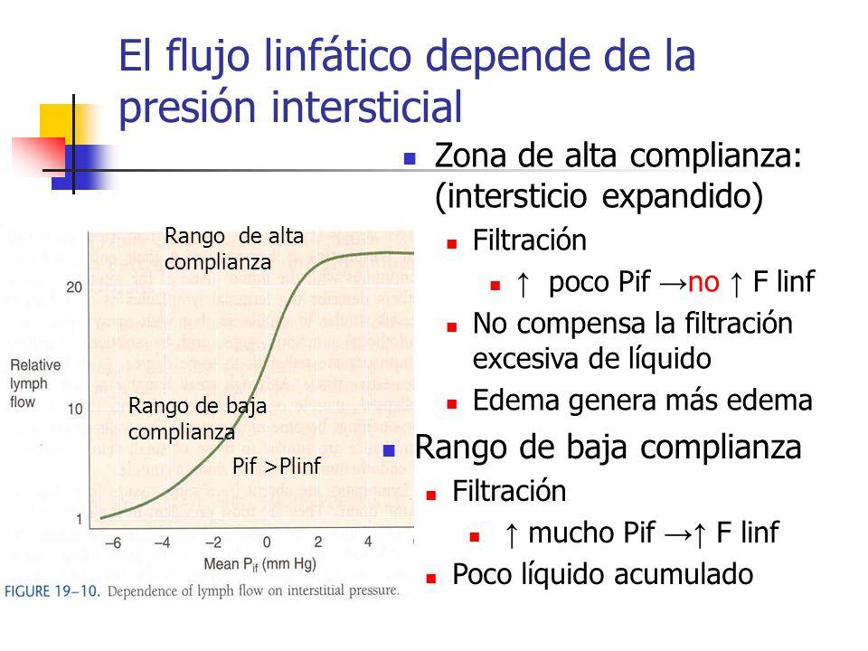 El flujo linfático depende de la presión intersticial Zona de alta complianza: (intersticio expandido) Filtración poco Pif no F linf No compensa la fi