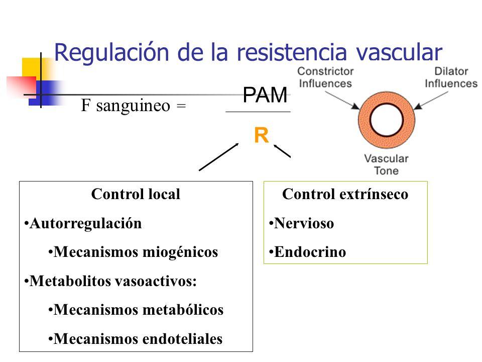 Regulación de la resistencia vascular F sanguineo = PAM R Control local Autorregulación Mecanismos miogénicos Metabolitos vasoactivos: Mecanismos meta