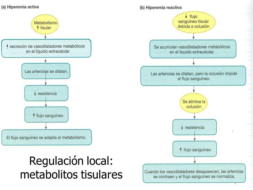 Regulación local: metabolitos tisulares