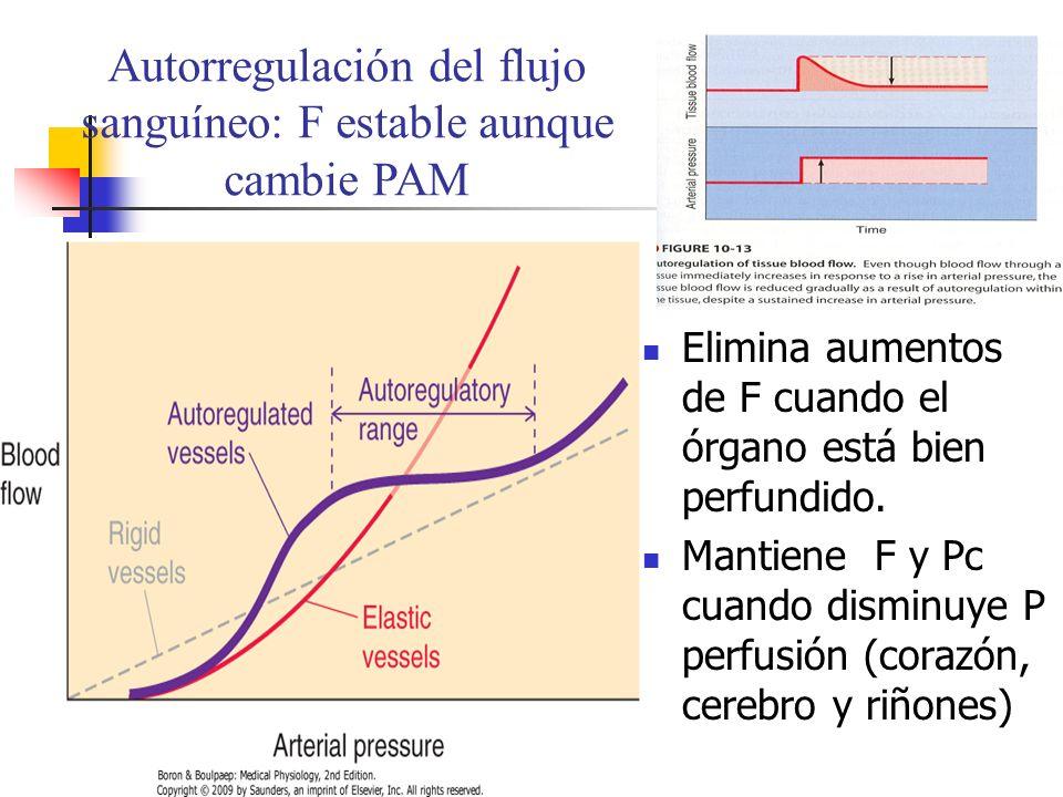 Autorregulación del flujo sanguíneo: F estable aunque cambie PAM Elimina aumentos de F cuando el órgano está bien perfundido. Mantiene F y Pc cuando d