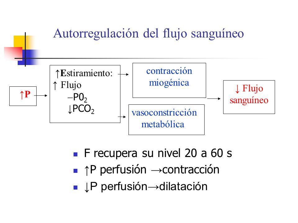 Autorregulación del flujo sanguíneo P Flujo sanguíneo Estiramiento: Flujo P0 2 PCO 2 vasoconstricción metabólica contracción miogénica F recupera su n