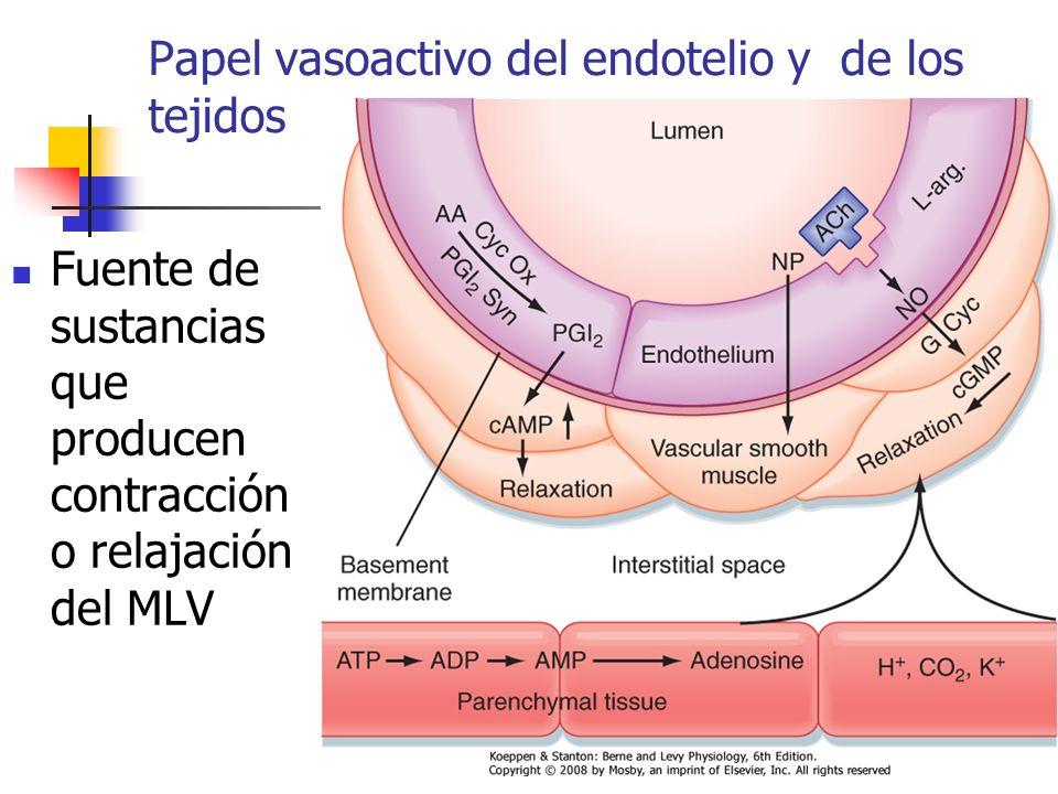 Papel vasoactivo del endotelio y de los tejidos Fuente de sustancias que producen contracción o relajación del MLV