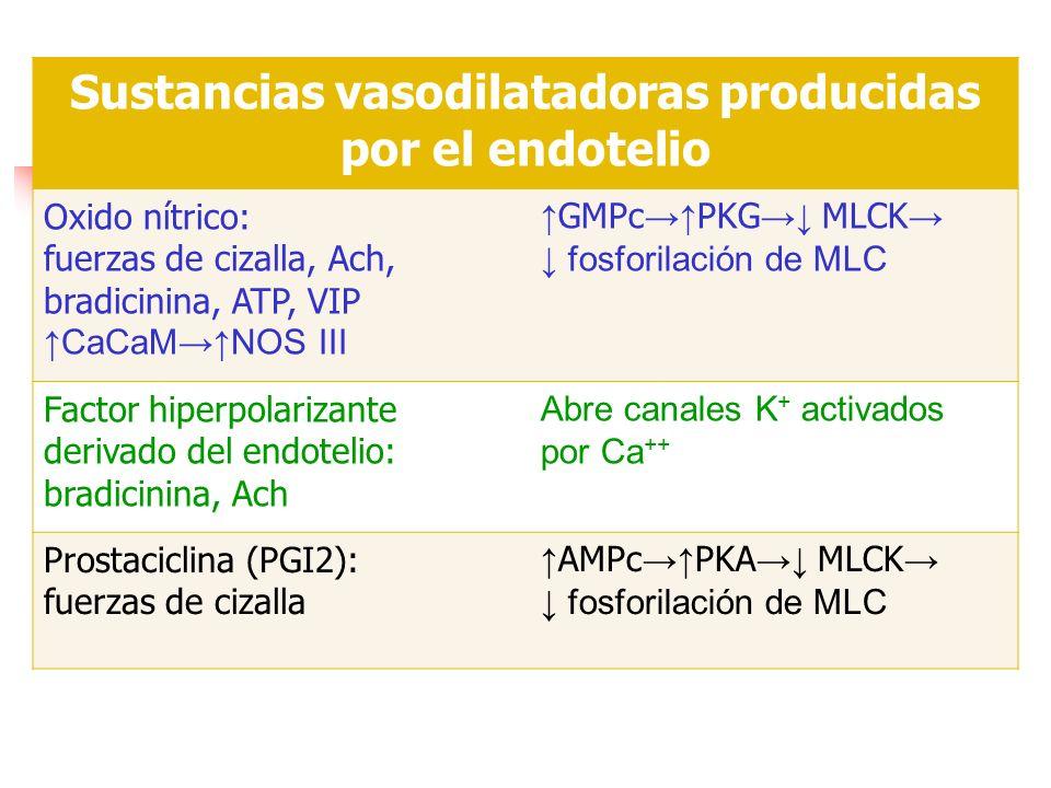 Sustancias vasodilatadoras producidas por el endotelio Oxido nítrico: fuerzas de cizalla, Ach, bradicinina, ATP, VIP CaCaMNOS III GMPc PKG MLCK fosfor
