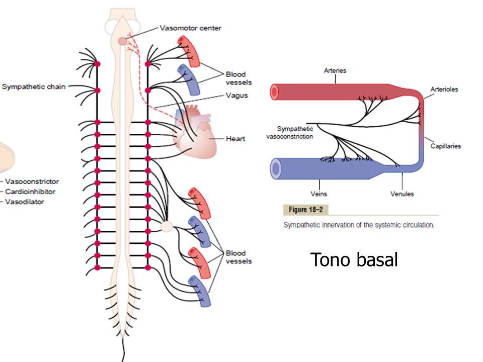 Tono basal