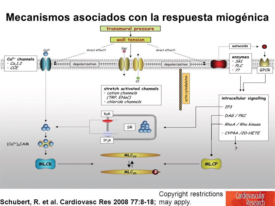 Copyright restrictions may apply. Schubert, R. et al. Cardiovasc Res 2008 77:8-18; Mecanismos asociados con la respuesta miogénica
