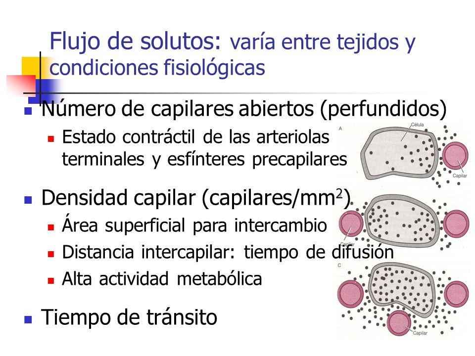 Flujo de solutos: varía entre tejidos y condiciones fisiológicas Número de capilares abiertos (perfundidos) Estado contráctil de las arteriolas termin