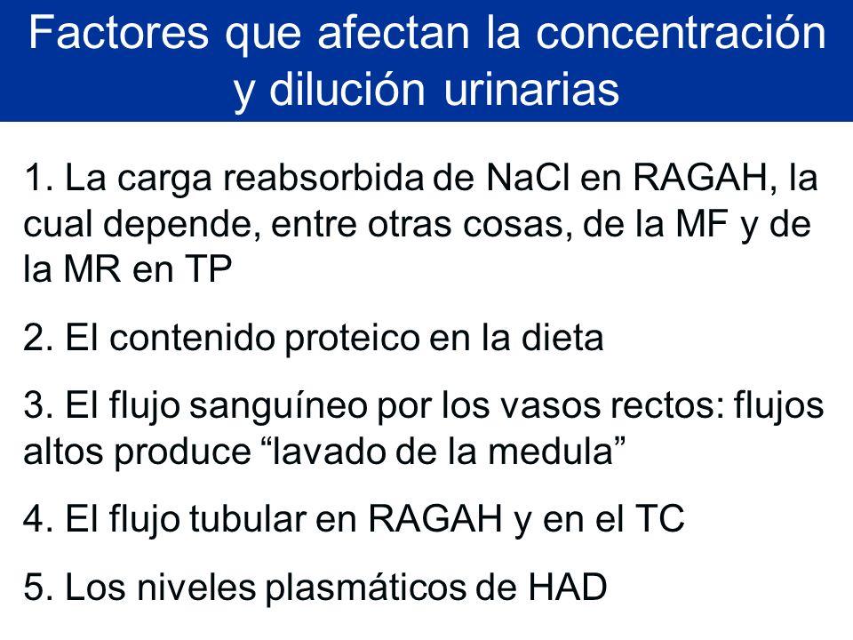 Factores que afectan la concentración y dilución urinarias 1. La carga reabsorbida de NaCl en RAGAH, la cual depende, entre otras cosas, de la MF y de