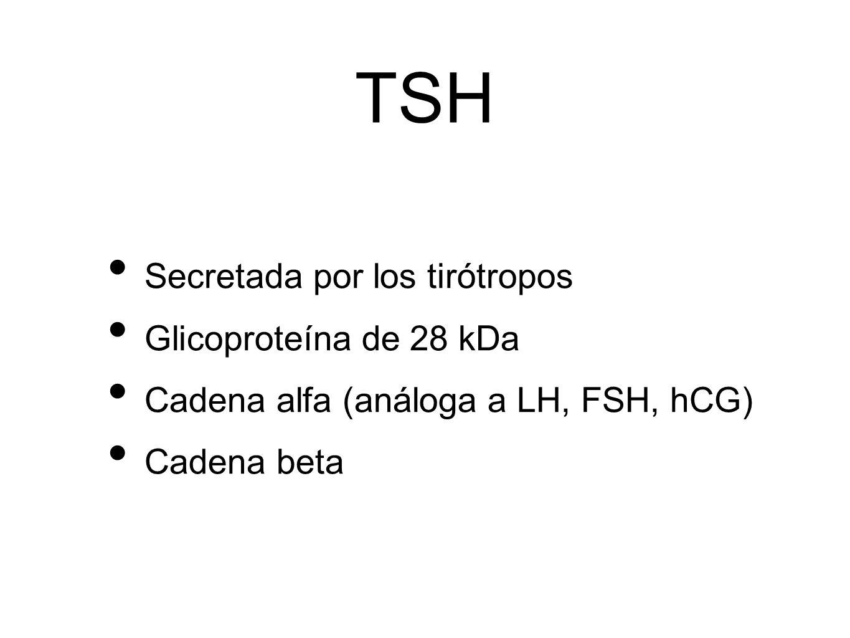 TSH Secretada por los tirótropos Glicoproteína de 28 kDa Cadena alfa (análoga a LH, FSH, hCG) Cadena beta