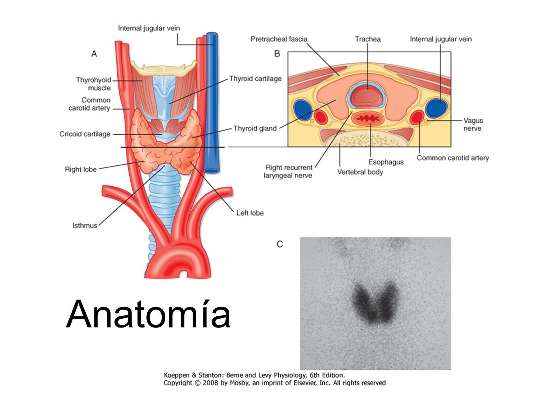 Nat Med. 2010 September ; 16(9): 1001–1008 Tasa metabólica basal