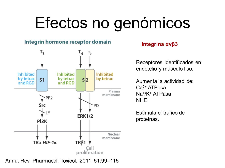 Efectos no genómicos Annu. Rev. Pharmacol. Toxicol. 2011. 51:99–115 Receptores identificados en endotelio y músculo liso. Aumenta la actividad de: Ca