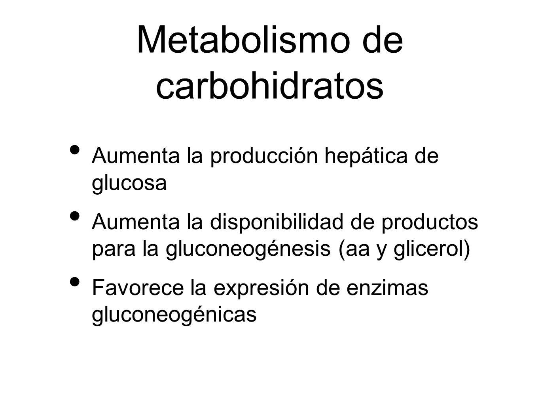 Metabolismo de carbohidratos Aumenta la producción hepática de glucosa Aumenta la disponibilidad de productos para la gluconeogénesis (aa y glicerol)