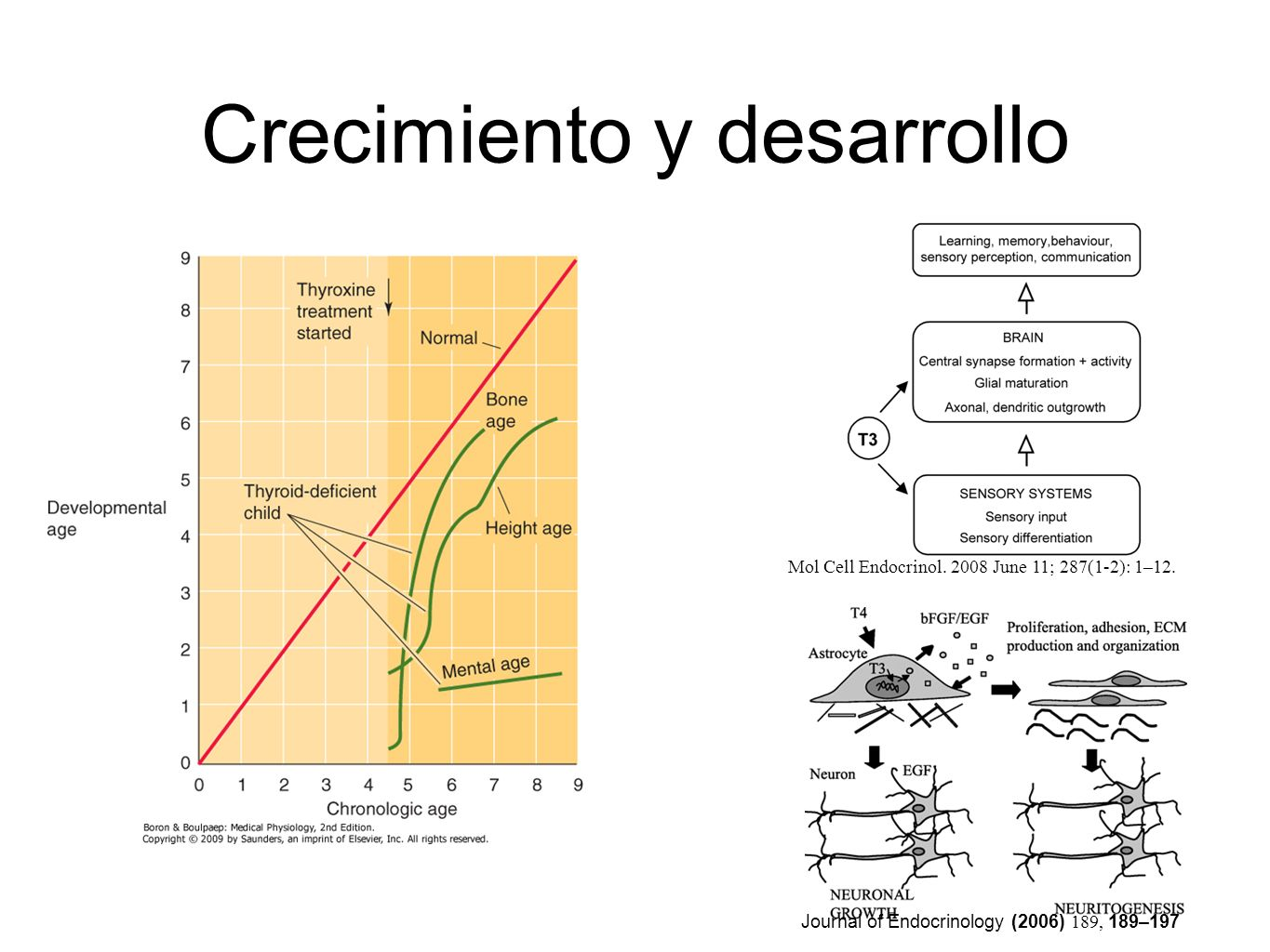 Journal of Endocrinology (2006) 189, 189–197 Crecimiento y desarrollo Mol Cell Endocrinol.