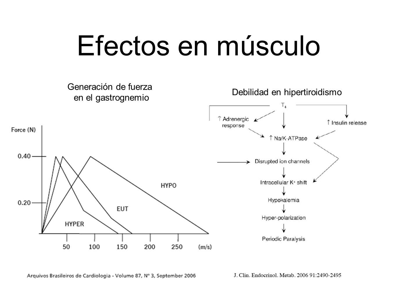 Efectos en músculo Generación de fuerza en el gastrognemio Debilidad en hipertiroidismo