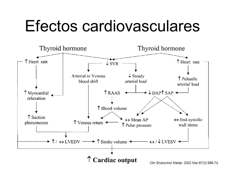 Efectos cardiovasculares Clin Endocrinol Metab. 2002 Mar;87(3):968-74.