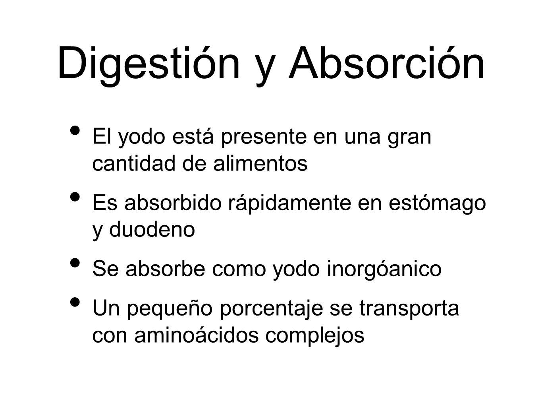 Digestión y Absorción El yodo está presente en una gran cantidad de alimentos Es absorbido rápidamente en estómago y duodeno Se absorbe como yodo inor