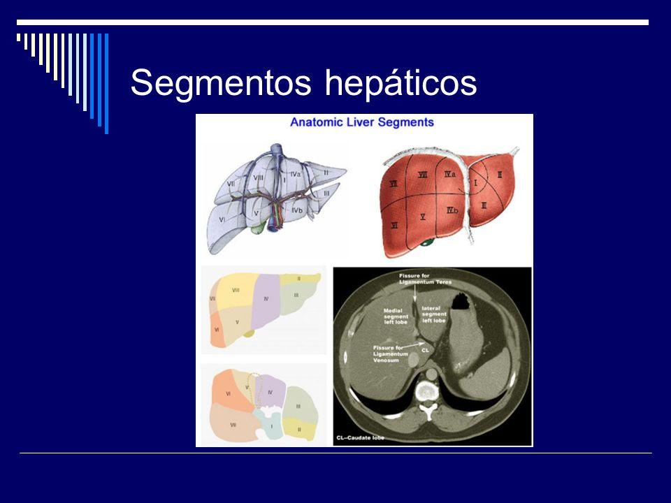 Segmentos hepáticos