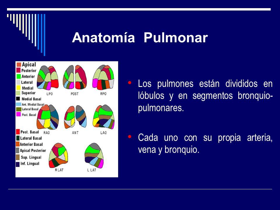 Anatomía Pulmonar Los pulmones están divididos en lóbulos y en segmentos bronquio- pulmonares. Cada uno con su propia arteria, vena y bronquio.