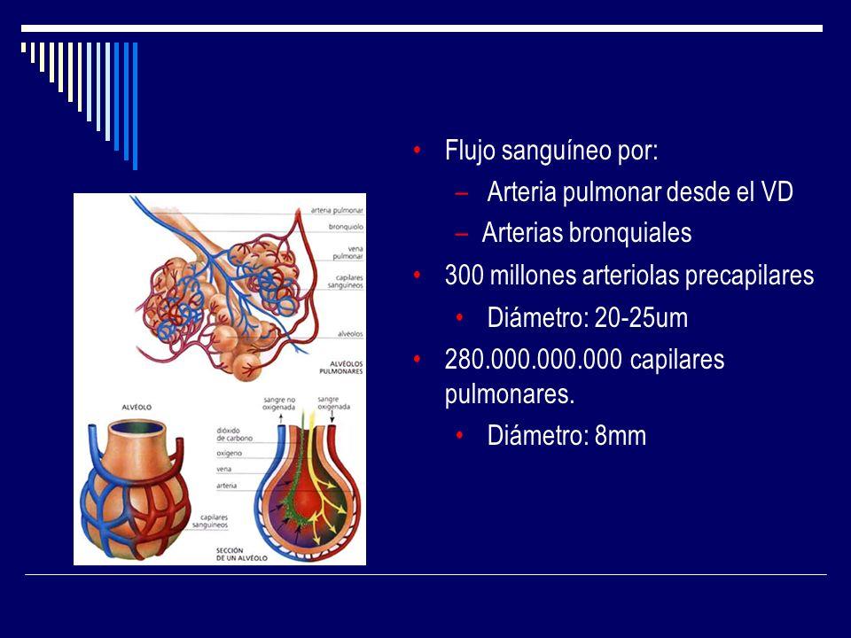 Flujo sanguíneo por: – Arteria pulmonar desde el VD –Arterias bronquiales 300 millones arteriolas precapilares Diámetro: 20-25um 280.000.000.000 capil