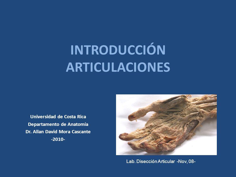 INTRODUCCIÓN ARTICULACIONES Universidad de Costa Rica Departamento de Anatomía Dr. Allan David Mora Cascante -2010- Lab. Disección Articular -Nov, 08-