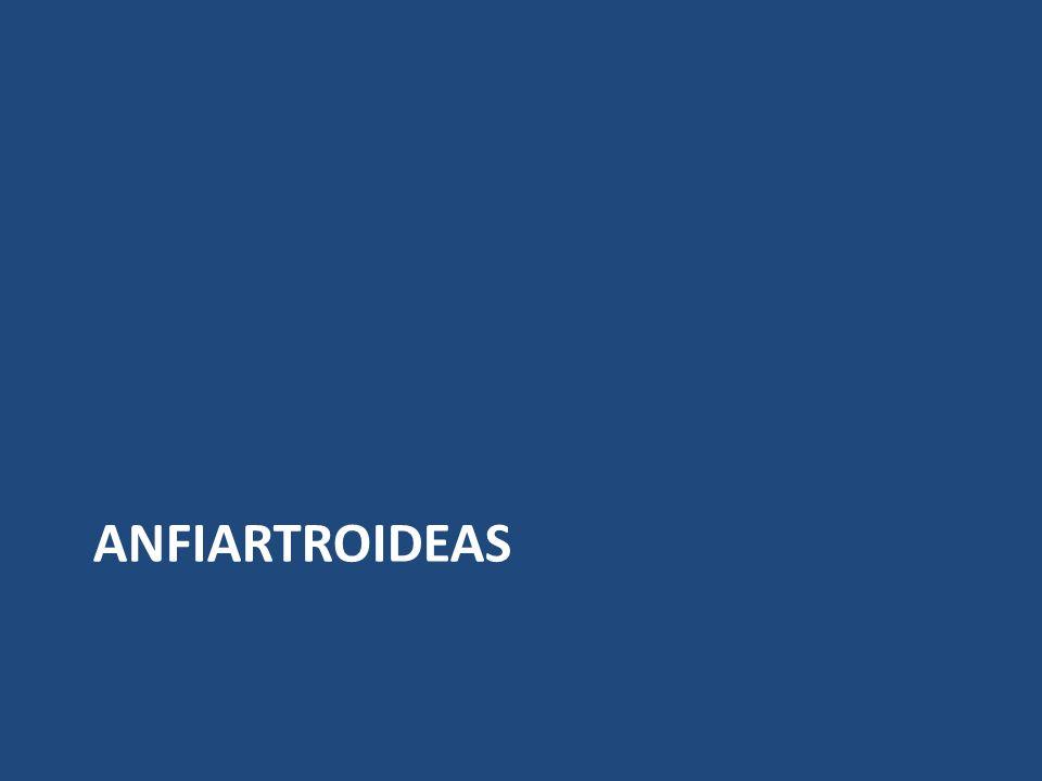 ANFIARTROIDEAS