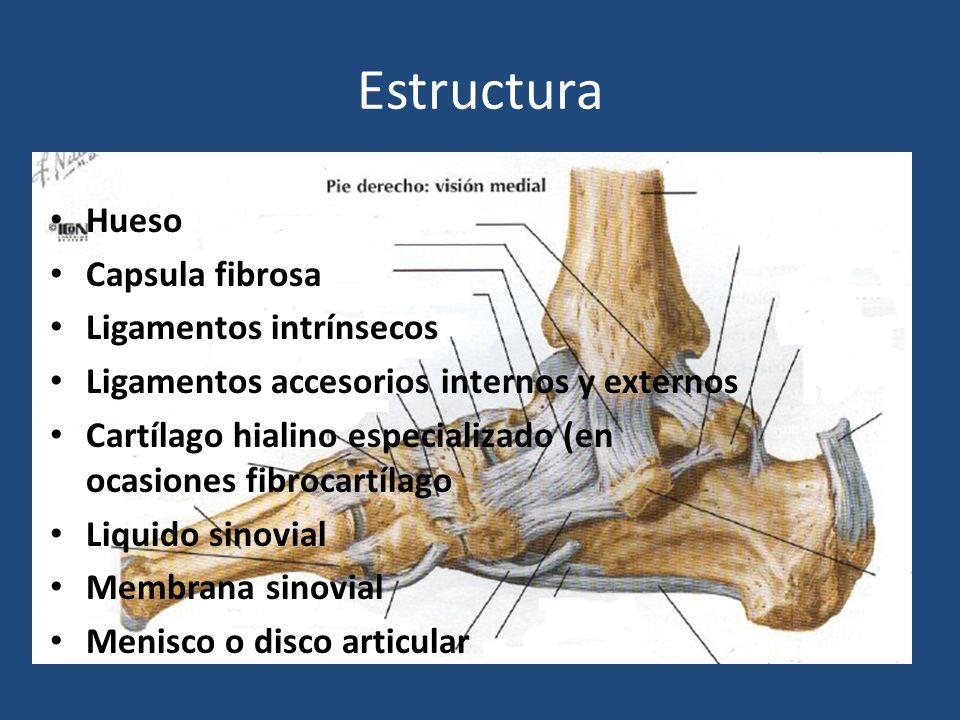 Estructura Hueso Capsula fibrosa Ligamentos intrínsecos Ligamentos accesorios internos y externos Cartílago hialino especializado (en ocasiones fibroc