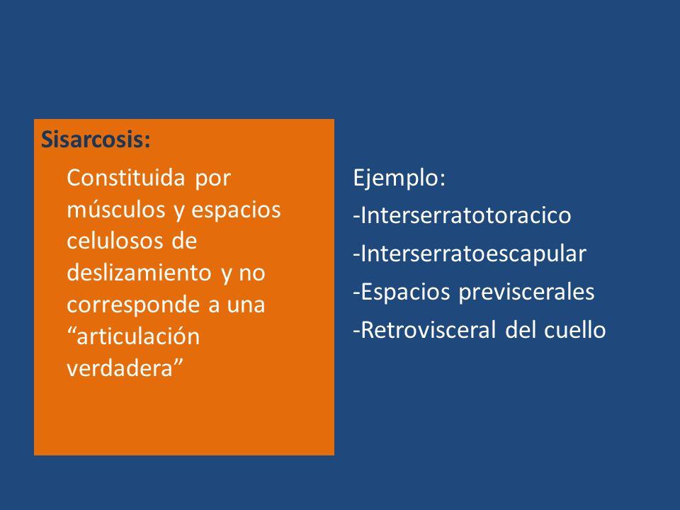 Sisarcosis: Constituida por músculos y espacios celulosos de deslizamiento y no corresponde a una articulación verdadera Ejemplo: -Interserratotoracic