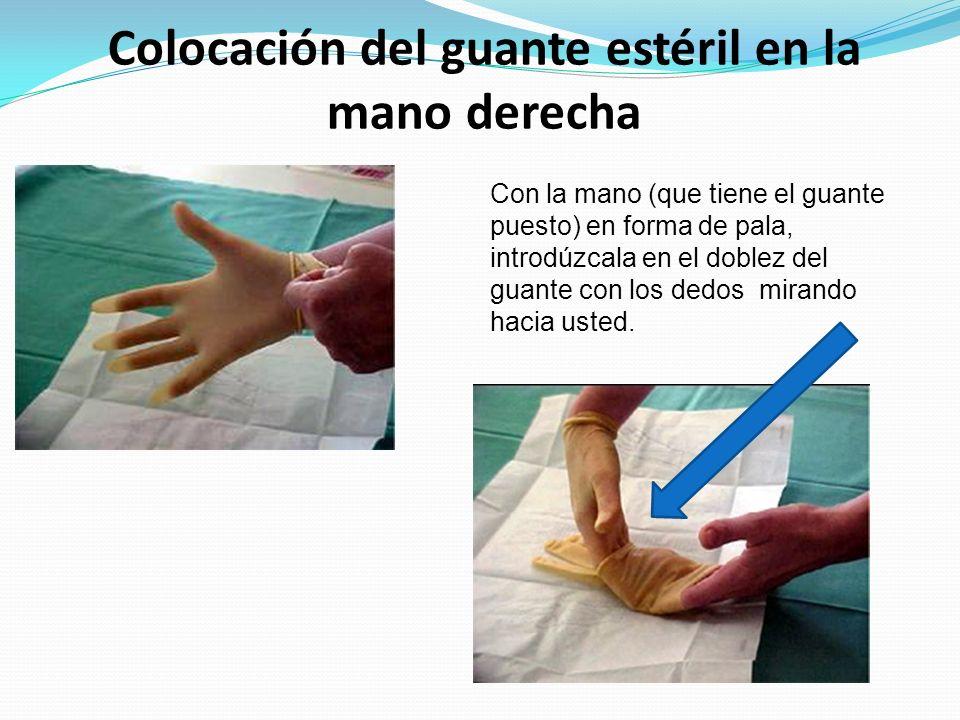 Colocación del guante estéril en la mano derecha Con la mano (que tiene el guante puesto) en forma de pala, introdúzcala en el doblez del guante con l
