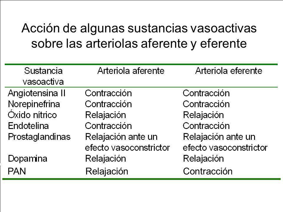Factores que modulan la TFG y el FPR AII: constricción aa y ae (pref); FPR; TFG se mantiene o ; contracción cels mesangiales SS: se estimula ante: dolor, estrés, trauma, hemorragia y ejercicio.