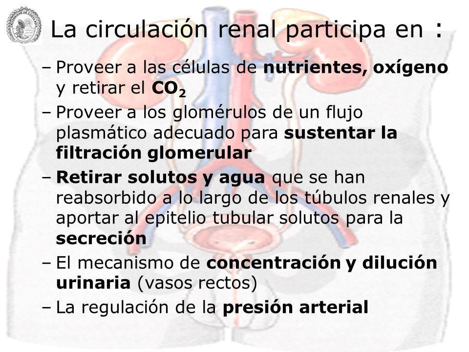 FR = FSR/GC FF = TFG/FPR Parámetros hemodinámicos renales