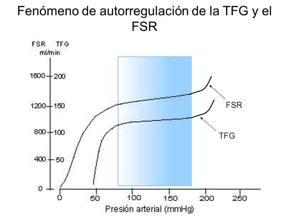 Mecanismos que explican la autoregulación renal 1.Mecanismo miogénico 2.Retroalimentación tubuloglomerular