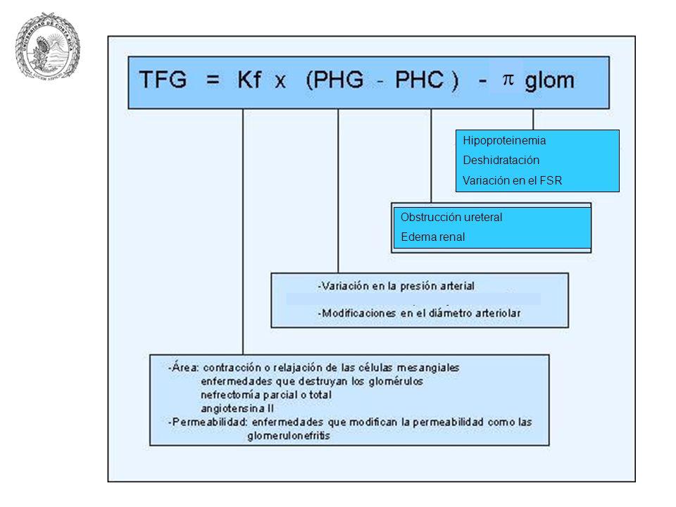 Hipoproteinemia Deshidratación Variación en el FSR Obstrucción ureteral Edema renal