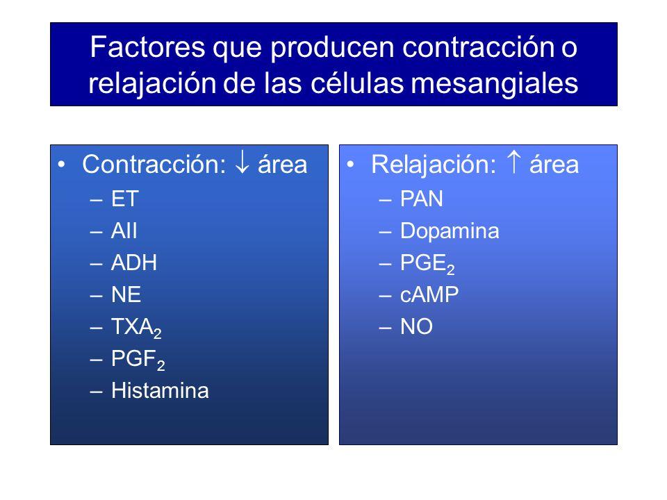 Factores que producen contracción o relajación de las células mesangiales Contracción: área –ET –AII –ADH –NE –TXA 2 –PGF 2 –Histamina Relajación: áre