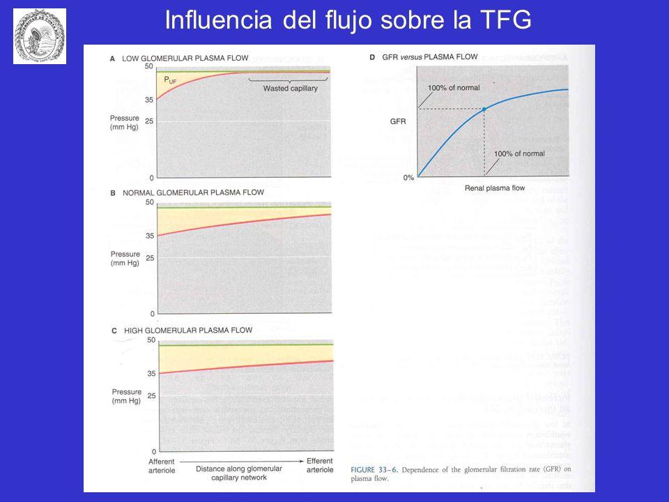Influencia del flujo sobre la TFG