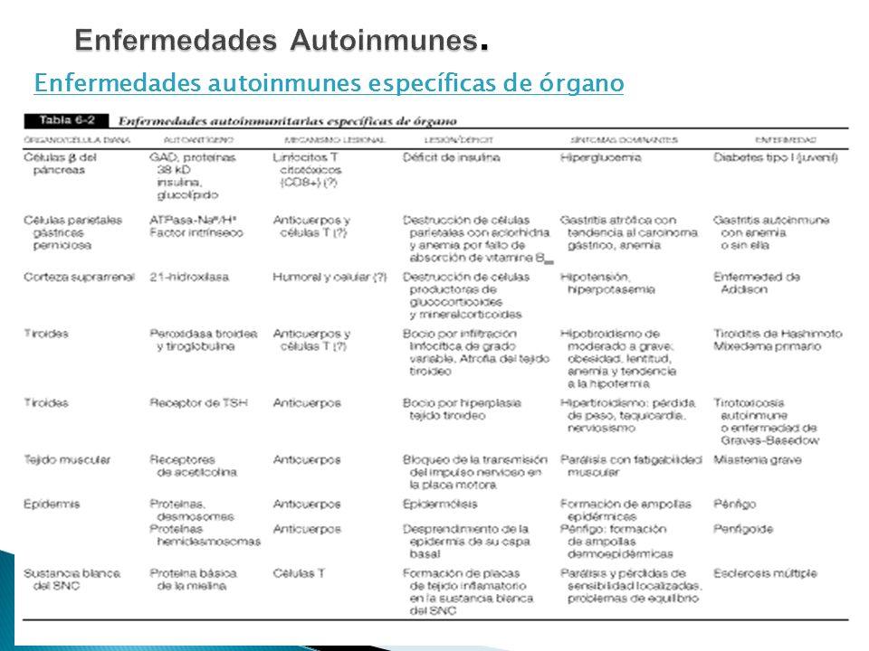 Enfermedades autoinmunes específicas de órgano 12