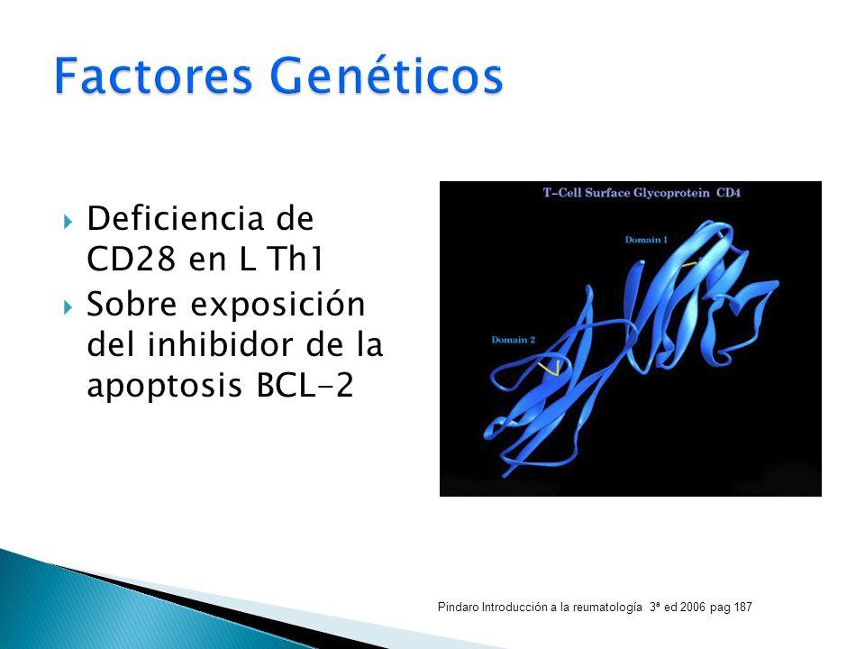 Deficiencia de CD28 en L Th1 Sobre exposición del inhibidor de la apoptosis BCL-2 Pindaro Introducción a la reumatología 3ª ed 2006 pag 187