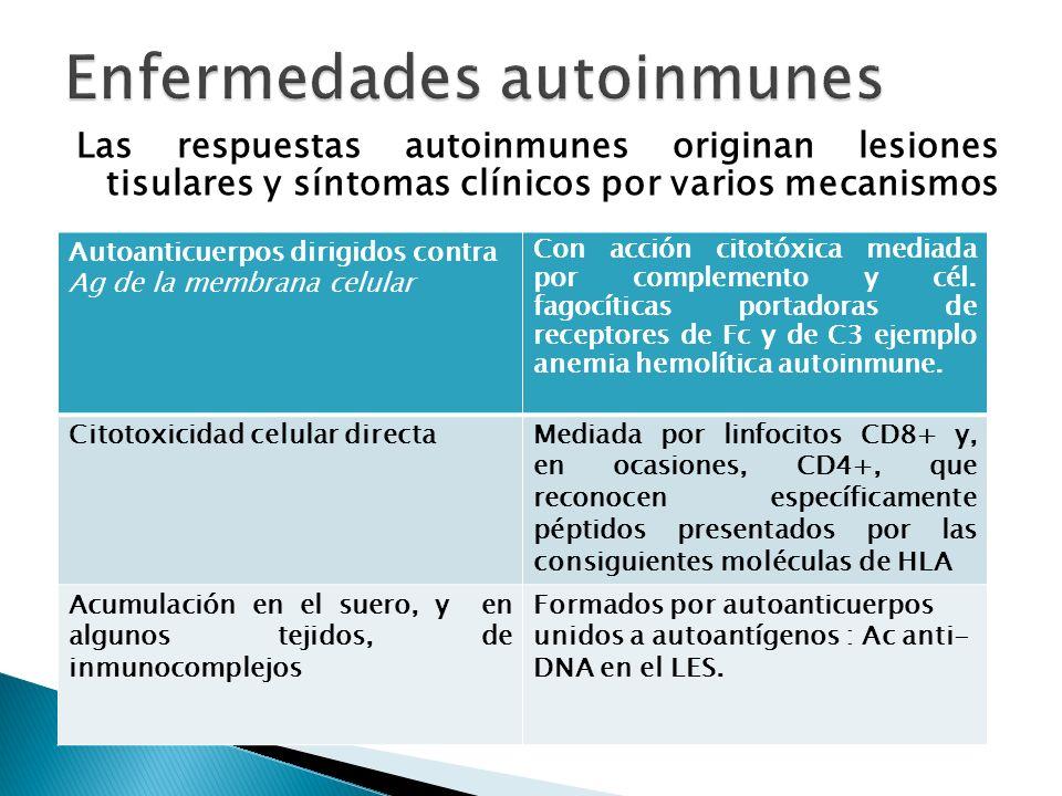 Las respuestas autoinmunes originan lesiones tisulares y síntomas clínicos por varios mecanismos Autoanticuerpos dirigidos contra Ag de la membrana ce