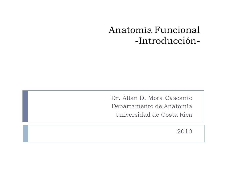 Anatomía Funcional -Introducción- Dr. Allan D. Mora Cascante Departamento de Anatomía Universidad de Costa Rica 2010