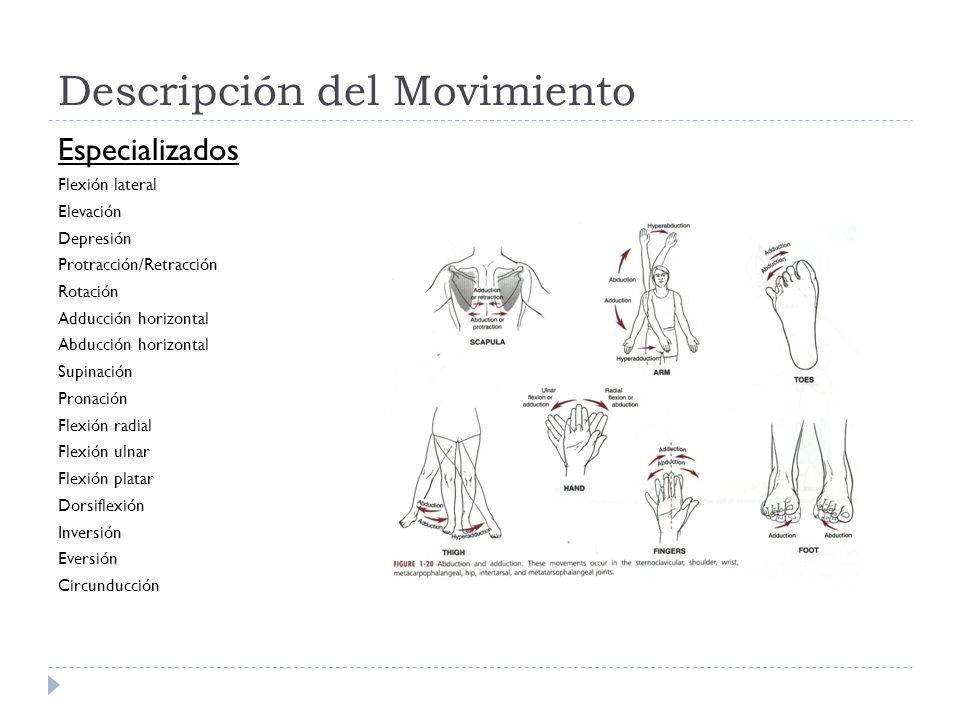 Descripción del Movimiento Especializados Flexión lateral Elevación Depresión Protracción/Retracción Rotación Adducción horizontal Abducción horizonta