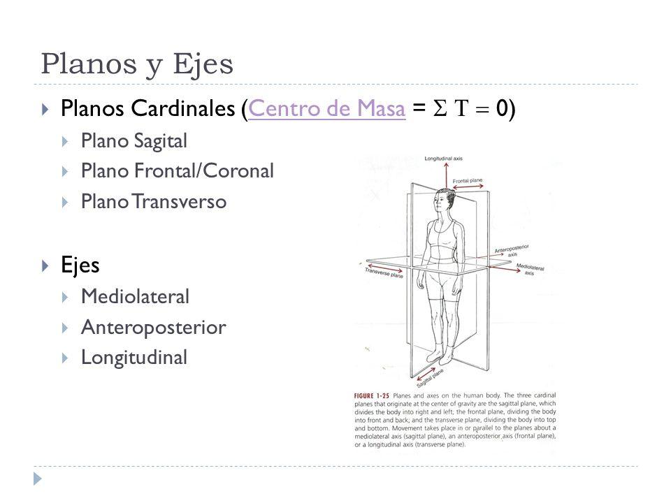 Planos y Ejes Planos Cardinales (Centro de Masa = 0)Centro de Masa Plano Sagital Plano Frontal/Coronal Plano Transverso Ejes Mediolateral Anteroposter