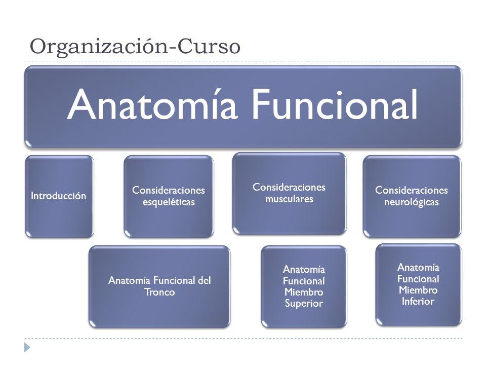 Organización-Curso Anatomía Funcional Introducción Consideraciones esqueléticas Anatomía Funcional del Tronco Consideraciones musculares Anatomía Func