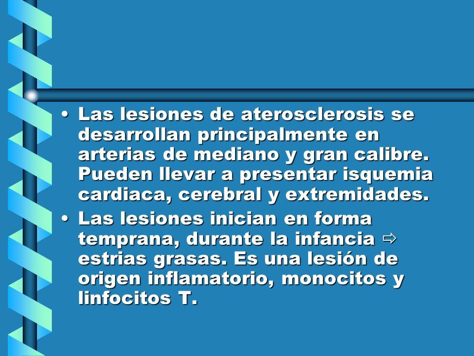 Las lesiones de aterosclerosis se desarrollan principalmente en arterias de mediano y gran calibre. Pueden llevar a presentar isquemia cardiaca, cereb