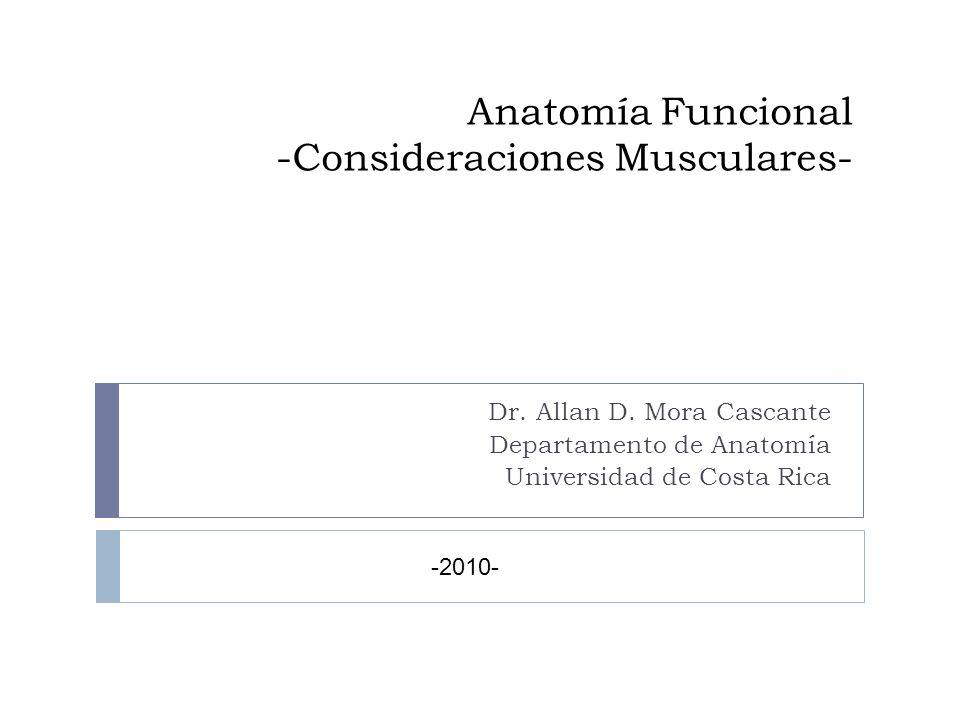 Anatomía Funcional -Consideraciones Musculares- Dr. Allan D. Mora Cascante Departamento de Anatomía Universidad de Costa Rica -2010-